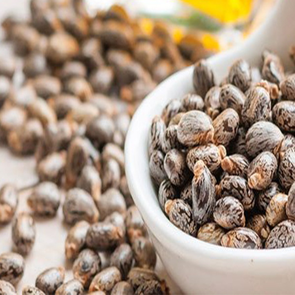 Commodity Outlook – Castor Seed