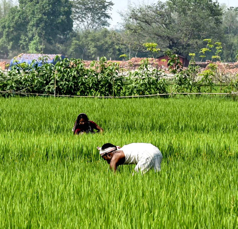 AgriBazaar's digital e-mandi helps small farmers get best price for their produce
