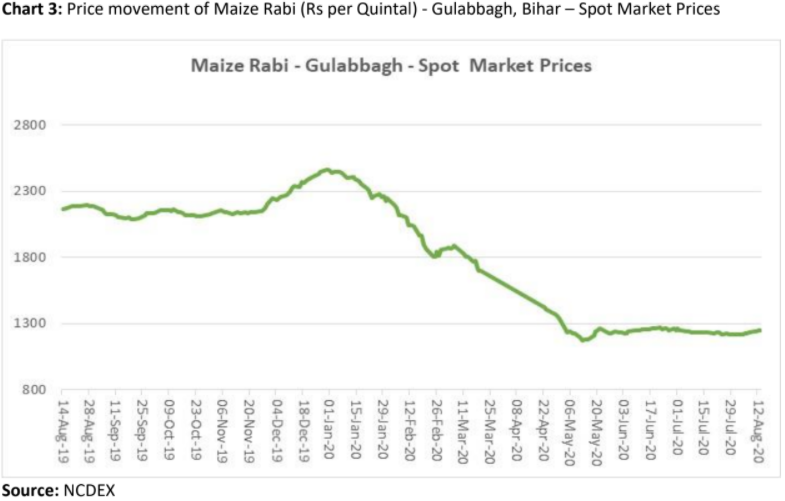 price movement of maize rabi in gulabbagh, bihar