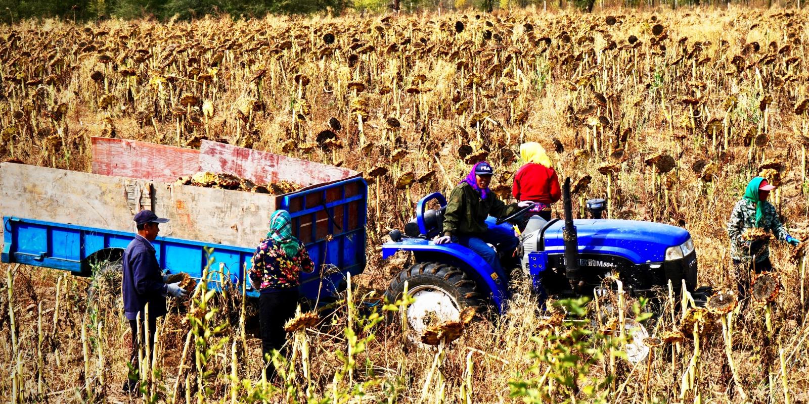 ई-मंडीः भारत की स्थानीय कृषि मंडी को ऑनलाइन लाना