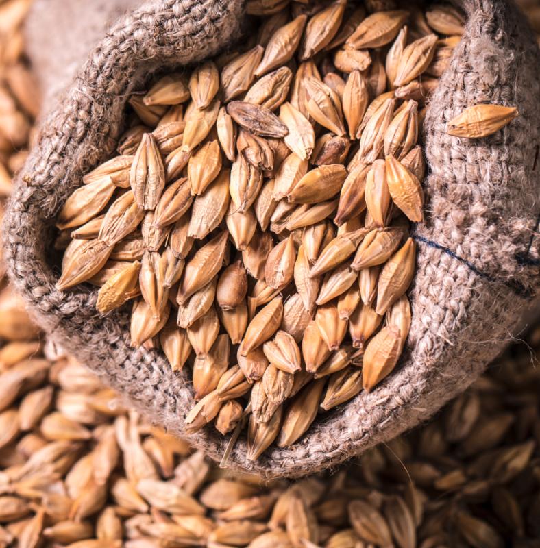 Commodity Outlook – Barley
