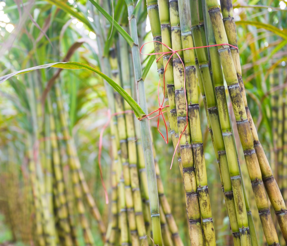 Commodity Outlook – Sugar