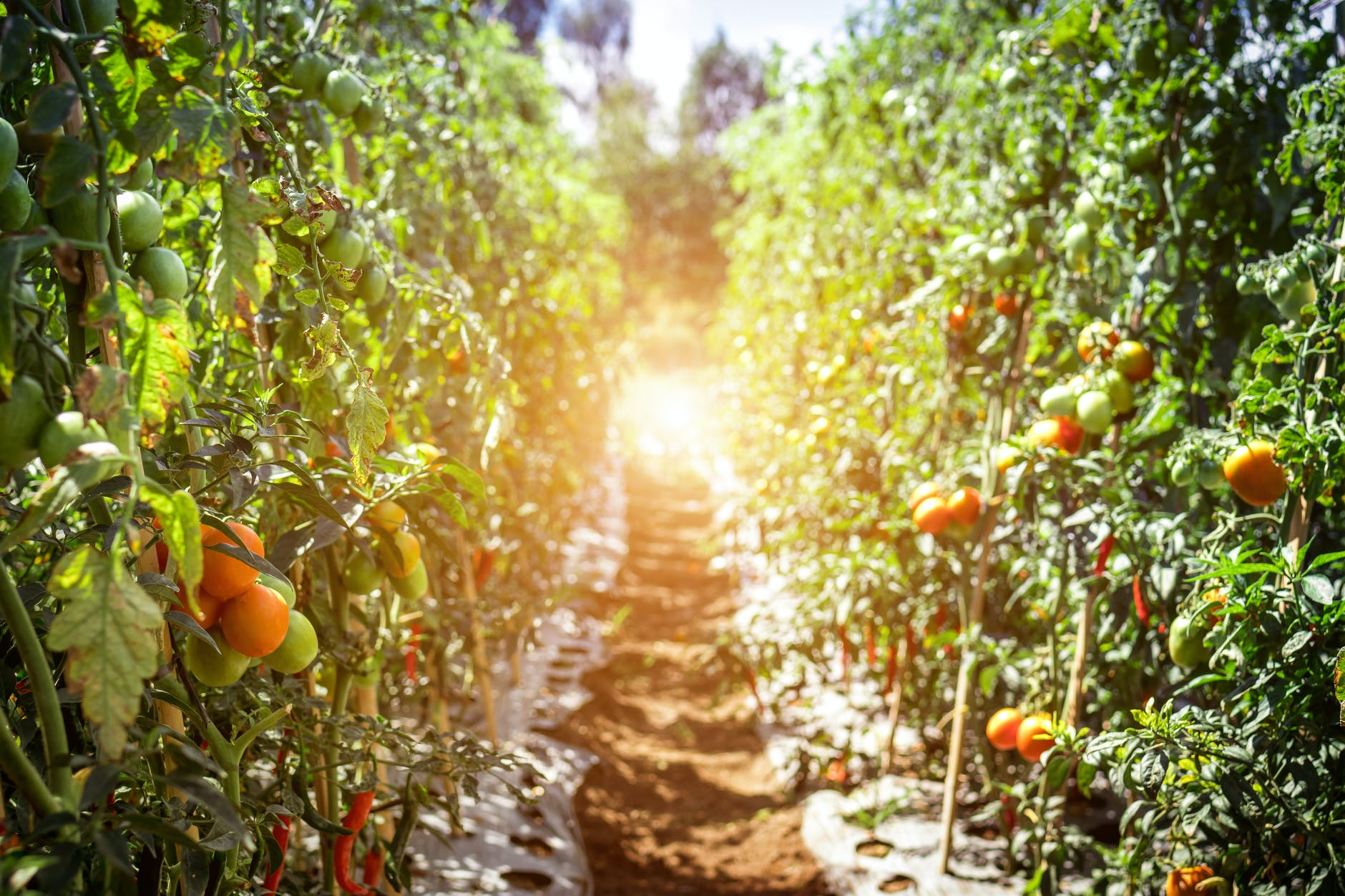 Top 5 Trends in The Indian AgriTech Space