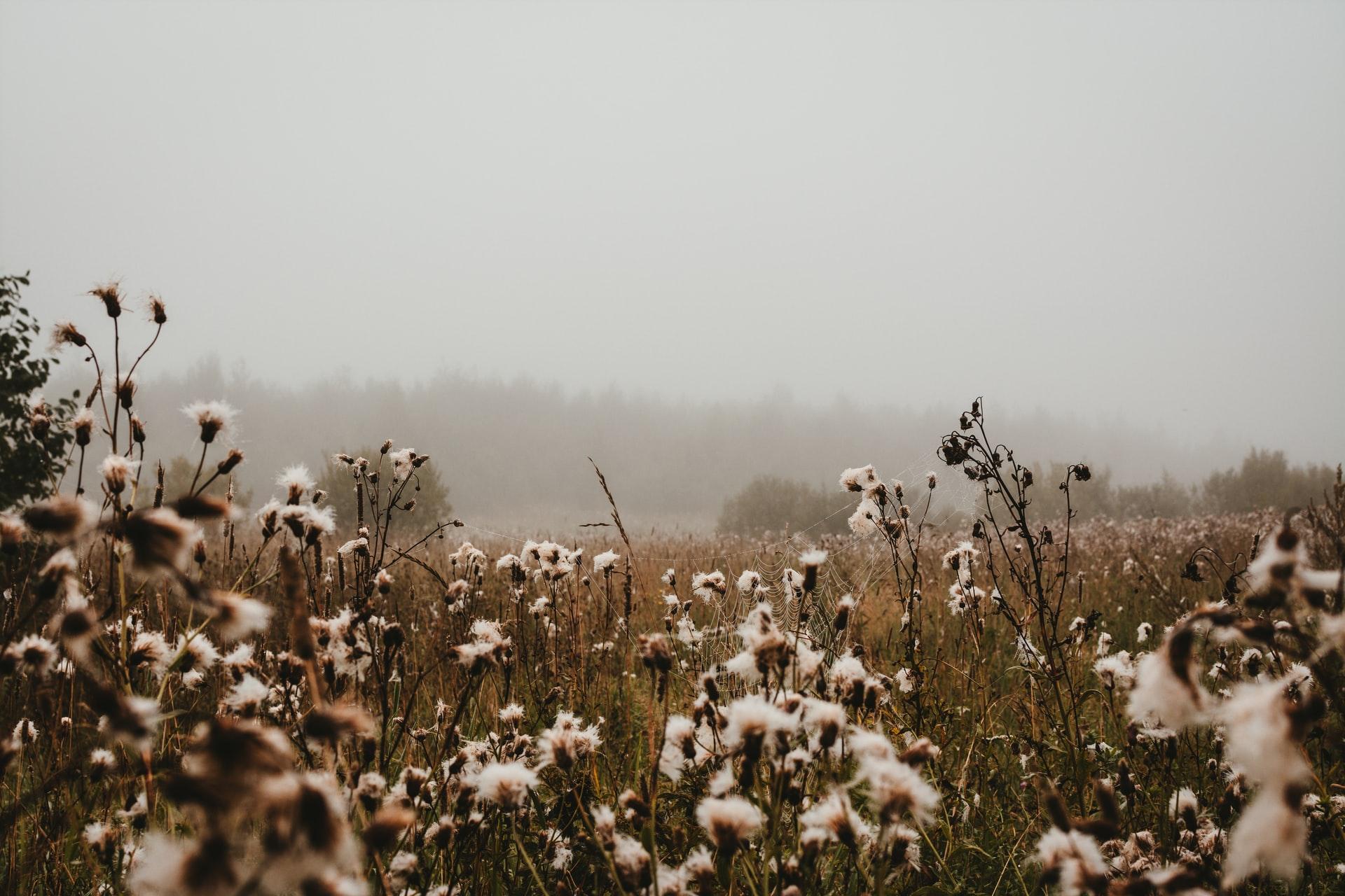 Cotton: Kharif season