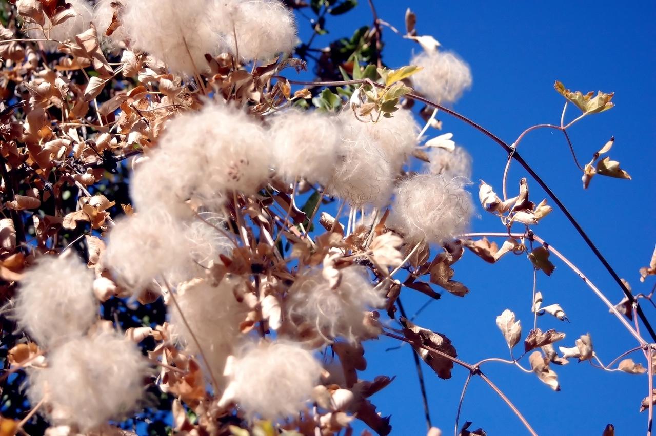 Better Ways to make Cotton Crop Better